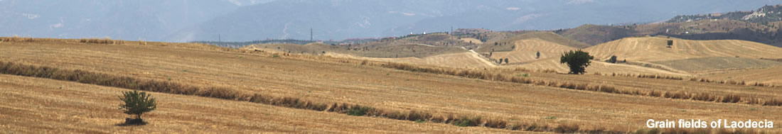 Grain fields, Laodecia, Turkey